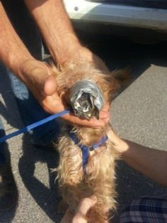 Maximum Penalty For Sidney Williams! Man That Kept His Dog With His Muzzle Duct Tapped!