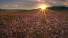 Wallpapers Romantic For Two Flower Field Free Widescreen Hd Sunset ...