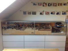 [Aquarium] Glasbehälterverbund x für Dsungi Murphy - Gehegevorstellung - www. Hamster Live, Baby Hamster, Hamster House, Hamster Stuff, Pig Stuff, Cool Hamster Cages, Gerbil Cages, Mouse Cage, Hamster Habitat
