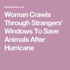 Woman Crawls Through Strangers' Windows To Save Animals After Hurricane