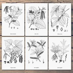 Set of 6 prints, Botanical print black and white, Black and white printable, Black and white tree, Botanical print set, large poster, JPG A3