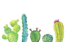 Cactus Desktop Wallpaper | Tell Me Tuesday Blog