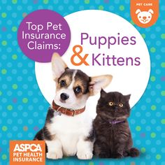 Top Pet Insurance Claims: Puppies and Kittens Pet Insurance Reviews, Pet Health Insurance, Best Pet Insurance, Puppy Care, Dog Care, Animal Shelter Volunteer, Embrace Pet Insurance, Animal Medicine, Pet Breeds