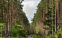 Cyclists ride the forest trails in Mikolajki, Poland