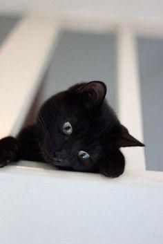 Sais tu que je te vois depuis là-haut!!!!
