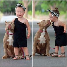 Look how pretty the pittie is!  Is this a red? I love the reds... ;)