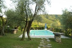 Olive trees. www.marilenalacasella.com