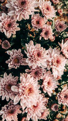 Flower Iphone Wallpaper, Vintage Flowers Wallpaper, Spring Wallpaper, Sunflower Wallpaper, Flower Background Wallpaper, Flower Backgrounds, Aesthetic Iphone Wallpaper, Photo Wallpaper, Aesthetic Wallpapers