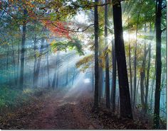 God Beams Lead the Way Home - Arkansas - Tim Ernst