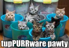 Tuppurrware… MOL http://sulia.com/my_thoughts/0a4e23c0-d241-4ec1-b1c7-4d554df28067/?pinner=124498063&