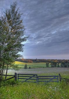 Landscape Photography Tips: Summer Pasture by Heather  Rivet