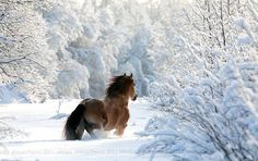 """Something to remember this winter with all the snow. """"No winter lasts forever; no spring skips it's turn. All The Pretty Horses, Beautiful Horses, Animals Beautiful, Cute Animals, Majestic Horse, Wild Animals, Nature Animals, Beautiful Things, Horses In Snow"""