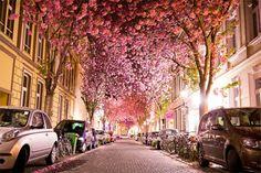 Túnel Cherry Blossom, Alemania