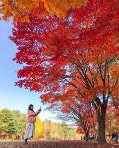 *🇰🇷 Autumn in Seoul (Korea) by Mehmet Sert (@mehmetsert) on Instagram 🍂 Nami Island Autumn, Autumn In Korea, Visit Chile, Korean Photo, Fall Travel Outfit, Autumn Photography, Photography Ideas, Jeju Island, Autumn Aesthetic