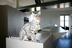 Cat house | Chateau d'eau - Bham Design Studio