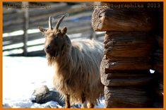 Portfolio Multimedeia: tammikuuta 2014 Lost In Translation, Ex Libris, Culture Travel, Ecology, Travel Photos, Horses, Artwork, Photography, Animals