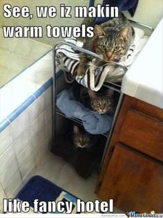 Attack Of The Funny Cats – 62 Pics