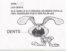 Projecte: Els conills