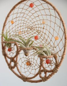 Round Air Plant Holder Natural Tillandsia Dreamcatcher Wall