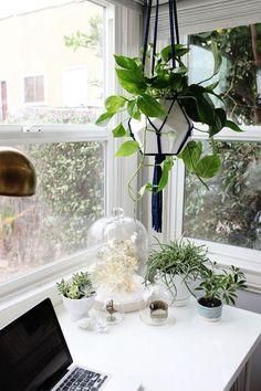 Colgadores de plantas de macramé