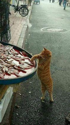 Le chat ne demande pas, il se sert.