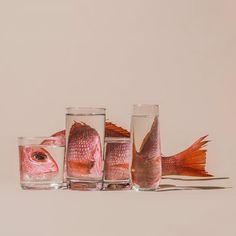Необычные фотографии через воду и стекло Сюзанны Сарофф (Suzanne Saroff)