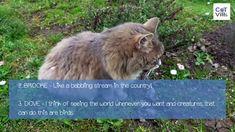 Tuna Bites Homemade Cat Treat Recipe for Sensitive Stomach - CatVills Cat Tree Condo, Cat Condo, Large Cat Tree, Huge Cat, Cat House Diy, Cat With Blue Eyes, Munchkin Cat, Cat Playground, Cat Trees