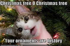 Christmas tree O Christmas tree, your ornaments are history. Has my cat written all over it.