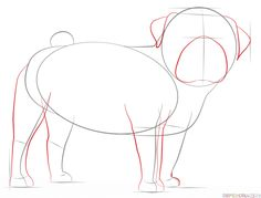 How to draw a pug dog step by step. Drawing tutorials for kids and beginners. Animal Paintings, Animal Drawings, Cute Drawings, Character Sketches, Animation Character, Character Illustration, Character Design, Female Drawing Poses, Drawing Tutorials For Kids