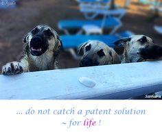 ... do not #catch a patent solution ~ for #life ! ( #Samara )