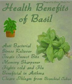 basil benefits - Google Search