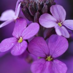 Rare, unusual, exciting plants delivered straight to your door with our No Quibble Guarantee. Lilac, Lavender, Plants Delivered, Herbaceous Border, Shades Of Purple, Perennials, Flora, Home And Garden, Ds