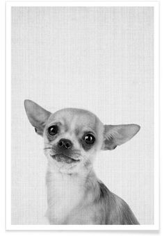 Print 53 als Premium Poster von Lila x Lola Animals And Pets, Baby Animals, Cute Animals, Cute Animal Pictures, Dog Pictures, Animals Black And White, Animal Photography, Pet Portraits, Bffs