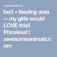 bed + feeding area -- my girls would LOVE this!! Priceless!   awesomeanimalz.com