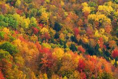 pictures of foliage in white mountians New hapshire | New Hampshire Fall