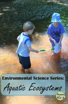 Learn about freshwater and marine environments in this lesson, then go looking for the creatures that live there!