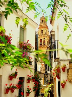 "sunsurfer:  "" Cordoba, Andalusia, Spain  photo via iguide  """