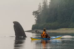 Paddler Nathaniel Stephens getting a close encounter with a Humpback whale in Port Frederick, Alaska. Photo taken from the kayak.