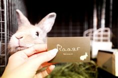 The Cherry Blossom Girl - Rabbit Café Tokyo 15