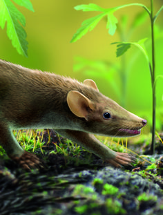 125-Million-Year-Old Mammal Fossil Preserved With Hair, Spines and Even A Fungal Infection