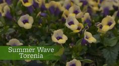 Watch The Best Flowers for Hanging Baskets in the Better Homes and Gardens Video