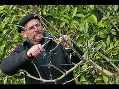 COMMENT BIEN TAILLER LES ARBRES FRUITIERS (taille trigemme) - YouTube