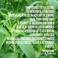 BENEFICIOS DE LA STEVIA. | #Salud con Plantas y Hierbas