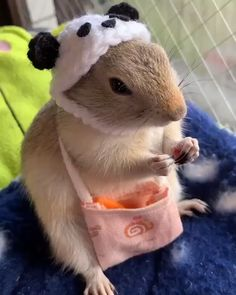 Funny Video That Rich Carrot Eats - Cutest Baby Animals Cute Little Animals, Cute Funny Animals, Cute Cats, Funny Rats, Cute Animal Videos, Cute Animal Pictures, Baby Animals Pictures, Cute Hamsters, Cute Piglets