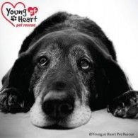 Young At Heart Pet Rescue, Inc. |  A few grey hairs shouldn't be the end of the world, but often for an older dog or cat in a traditional animal shelter, it is. Please donate today to help build the Midwest's first shelter for senior pets while they're looking for their forever homes. :)