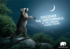 """KÖLNER ZOO/ZOO COLOGNE """"EVENING GUIDED TOURS-CAMPAIGN""""."""