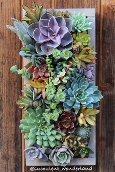 """15.5"""" x 7"""" Custom Rectangle Succulent Vertical Garden Made to order by SucculentWonderland on Etsy https://www.etsy.com/listing/178576403/155-x-7-custom-rectangle-succulent"""