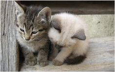 Cute Little Cats Wallpaper | cute baby white cats wallpaper, cute little cat wallpaper