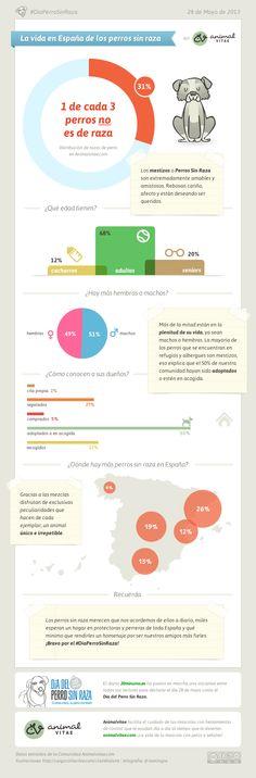 Infografía de los Perros Sin Raza @animalvitae #DiaPerroSinRaza #PerroSinRaza