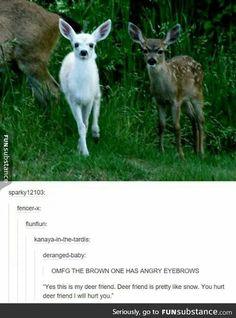 List of 8 best cat funny Hilarious God in week 7 - Get out of our forest - Funny Animal Memes, Cute Funny Animals, Stupid Funny Memes, Funny Animal Pictures, Cute Baby Animals, Funny Cute, Animals And Pets, Hilarious, Cat Memes